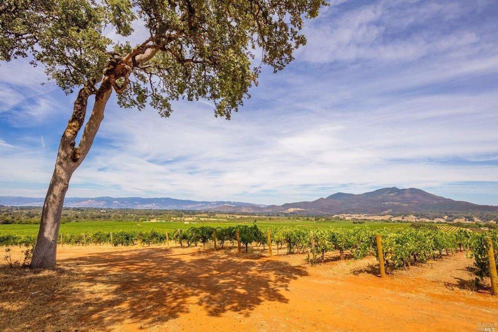 Brandt Ranch Vineyard View 4.jpg