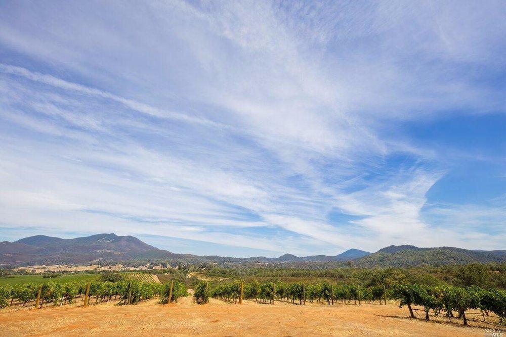 Brandt Ranch Vineyard View 5.jpg