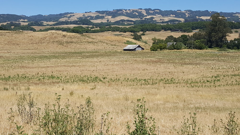 Jacobsen lower field.jpg