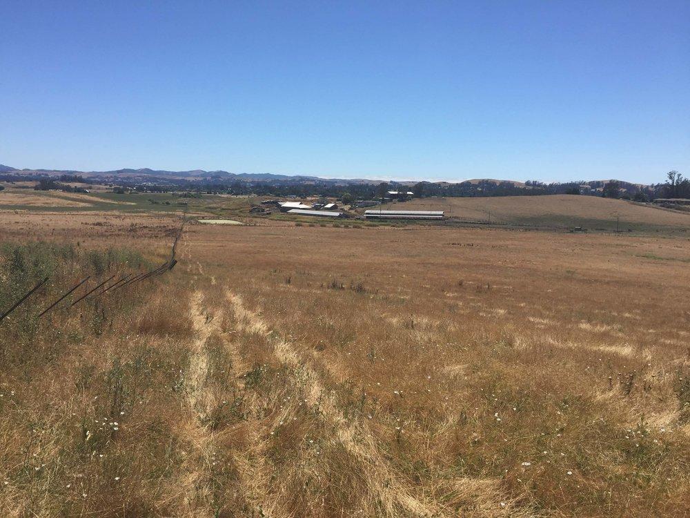 328 davis lane barns at a distance.jpg