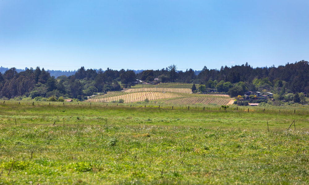 5743 Hall Road_Lynmar Vineyard.jpg