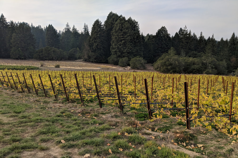 16000 COleman Valley Vineyard Shot.jpg