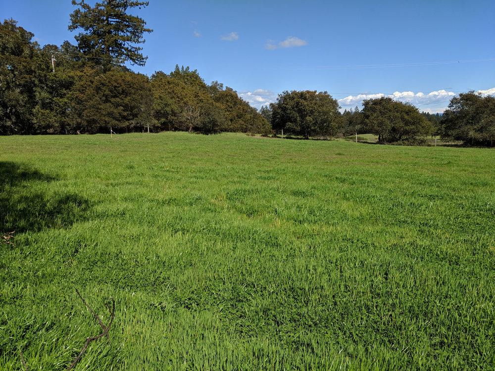 Coleman Valley Plantable Land.jpg