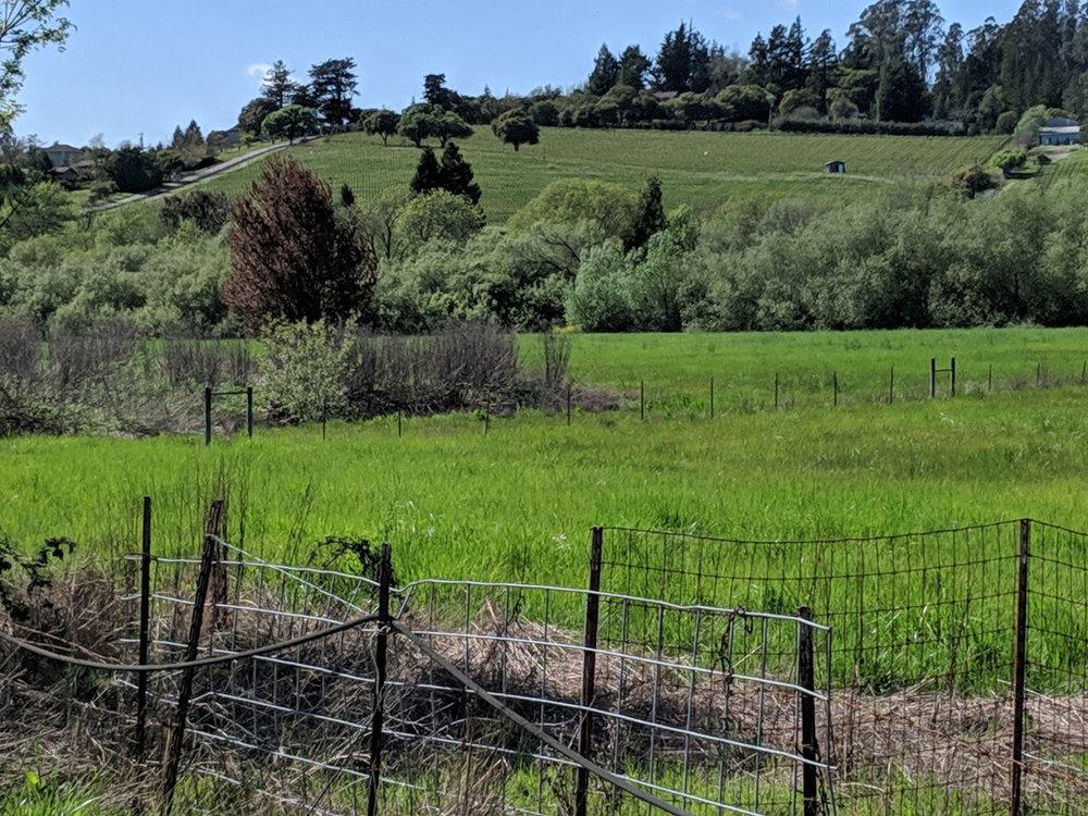 Meredith Estate vineyard on hillside.