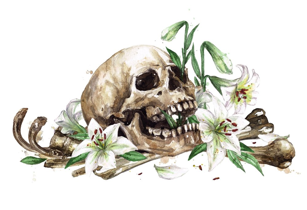 BONES_HUMAN_Skull_Flowers4_2018.jpg