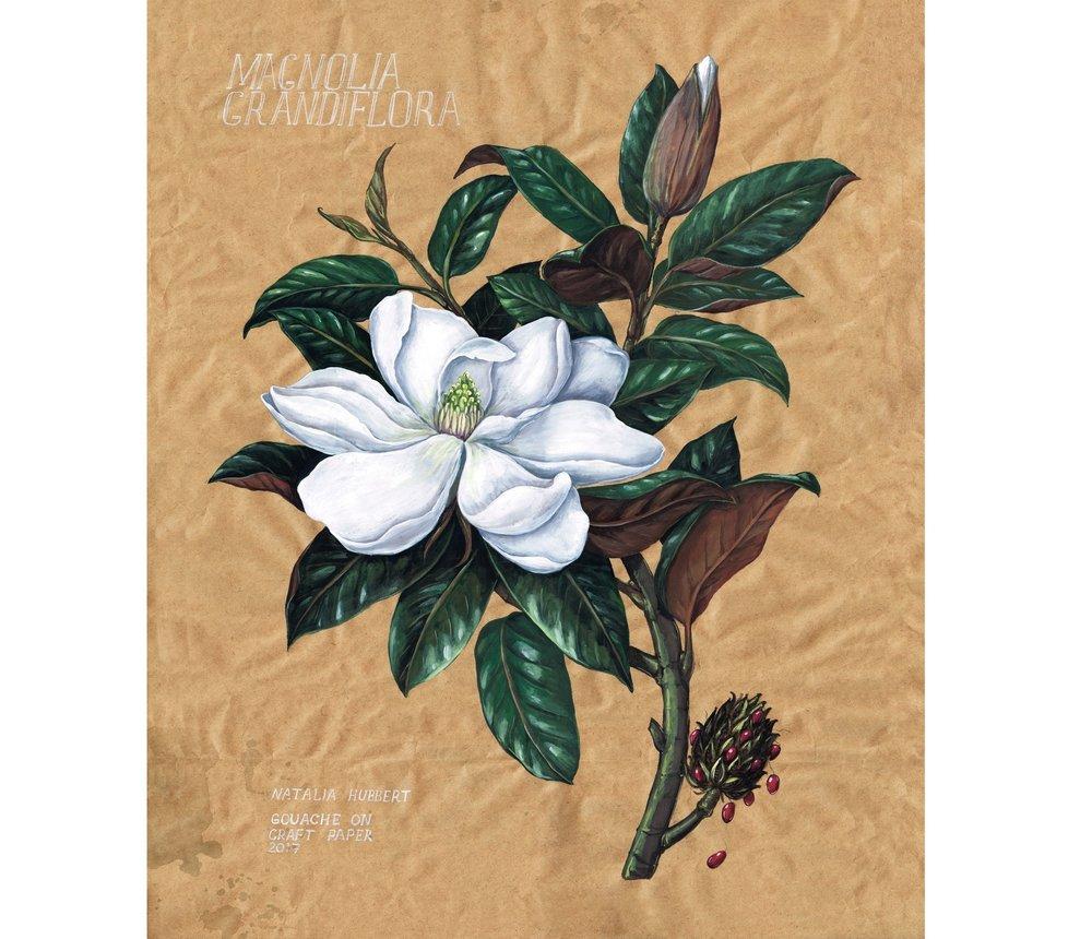 Botanical_Magnolia_NH.jpg