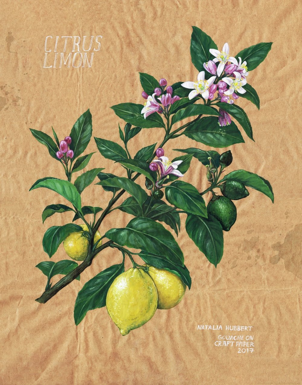 Botanical_Limon_NH.jpg