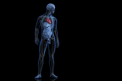 Illustration-of-human-anatomy-with-highlighted-heart.-3D-illustration.-Contains-clipping-path-7635-600x400.jpg