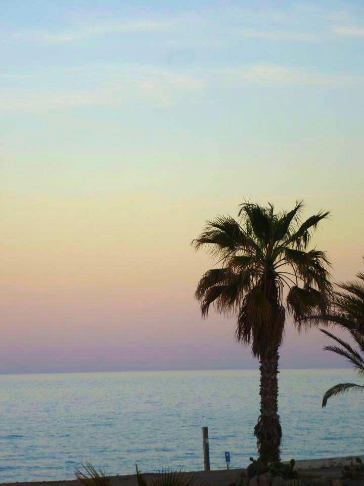 Palm-dusk.jpg
