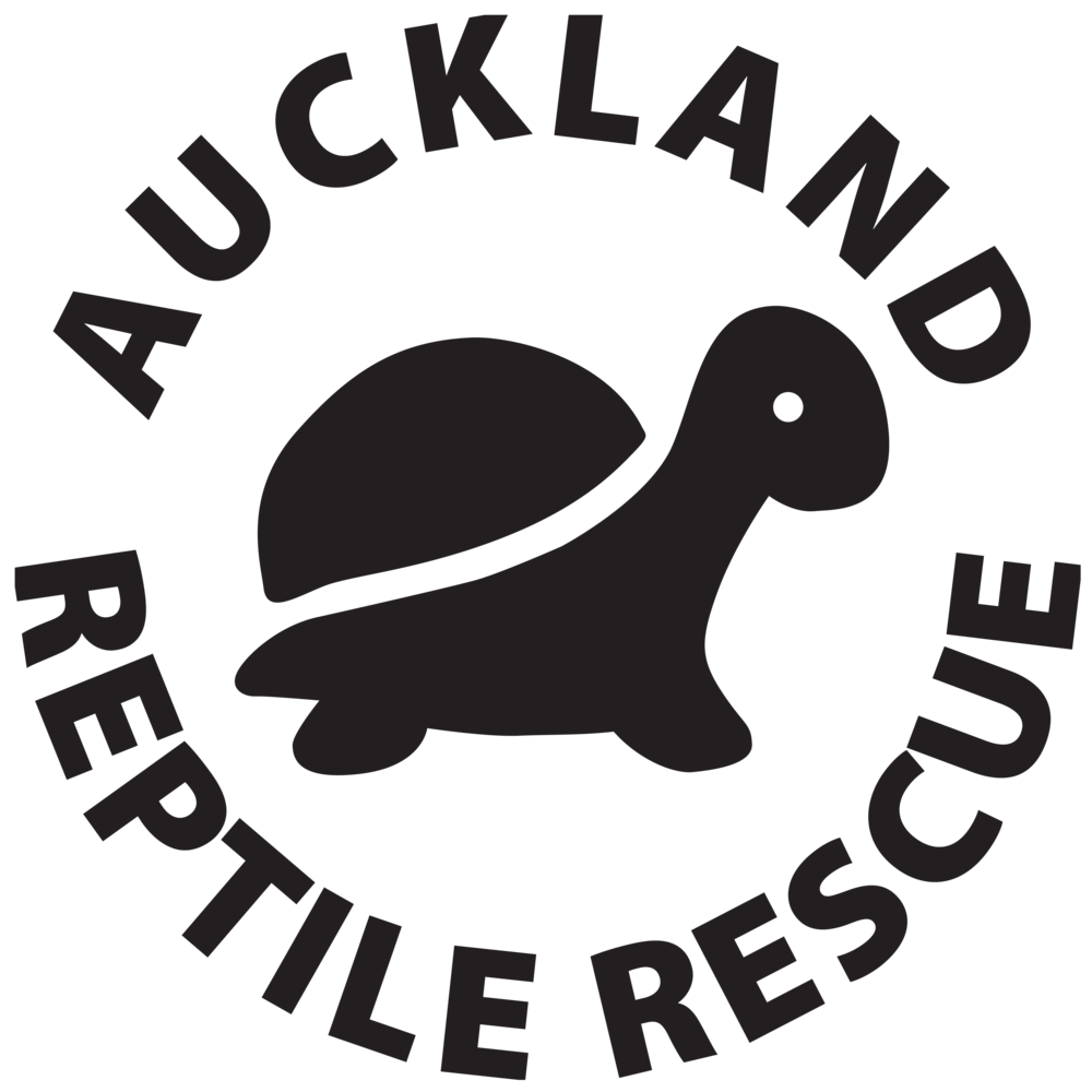 Support - Check out Auckland Reptile Rescue on Facebook to follow along the with the Turtles journey!