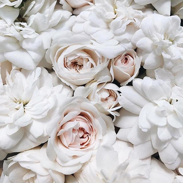 Say it with flowers 🙂 . .⠀ #flower #flowers #flowerpower #travel #lifestyle #nature #instaflowers #beautiful #beauty #delicate #instadaily #white #instawhite #picoftheday #photooftheday #peonies  #love #aesthetic #freedom #ballet #neoballet #dance #dancer #dancers #ballerina #pointeshoes #balletdancer #london #feet #dancersofinstagram  @clarafitness @thefirstladyofsong