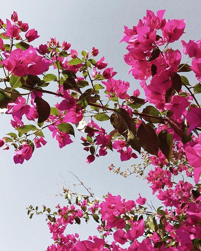 Have a wonderful Sunday . . . . . . . . . . . #ihavethisthingwithpink #colors #candyminimal #plants #plantsofinstagram #flores #instaflower #pink #whiteflowers #minimal_perfection #minimal #millenialpink #acolorstory #instanature #nature #natureporn #instapink #pinkstagram #greenery #details #pastel #pastelcolors #beautiful #instaflower #flowers #flowerpower #colorsplash