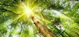 light trees.jpg