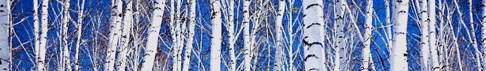 birch%2Bgrove.jpg
