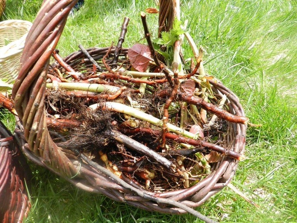 roots basket.jpg