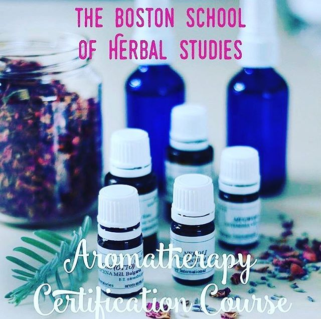 Dear Community!✨🍂 Please invite friends, family, neighbors and students to our beloved Aromatherapy courses to keep our communities  healthy all winter! ✨Aromatherapy Certification Training - Level 1 Saturday, Oct. 20, Nov. 17; Dec. 8, Jan 5th; 10AM - 5PM, $500 plus $50 materials fee✨ 12 Pelham Terrace, Arlington, MA 02476 with beloved Linda Patterson, Clinical Herbalist, Aromatherapist ✨ See our website to sign up! ✨ Learn how essential oils work to heal the body, mind and spirit. This comprehensive course addresses the body systems, their common ailments and the essential oils most helpful for each condition. Three different methods of blending will be introduced with demonstrations of how to use essential oils in our everyday lives. There will be a particular focus on reducing stress. We will also be making our own natural cosmetics and learning how to use essential oils to trigger memory, mood and attraction. 🌿✨ #aromatherapy #essentialoils #herbalism #bshs #plants #bostonschoolofherbalstudies #bostonherbalstudies  #bshs #bostonherbalstudies #aromatherapy #essentialoils #healyourself #bewell #herbalist #community @herbalistlindapatterson @bostonherbalstudies