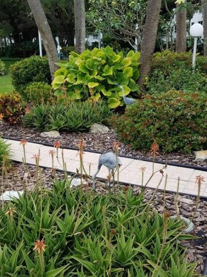 4th Bayshore garden bird copy.jpg