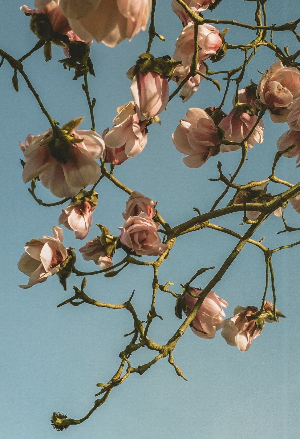 bloom jlatour.jpg