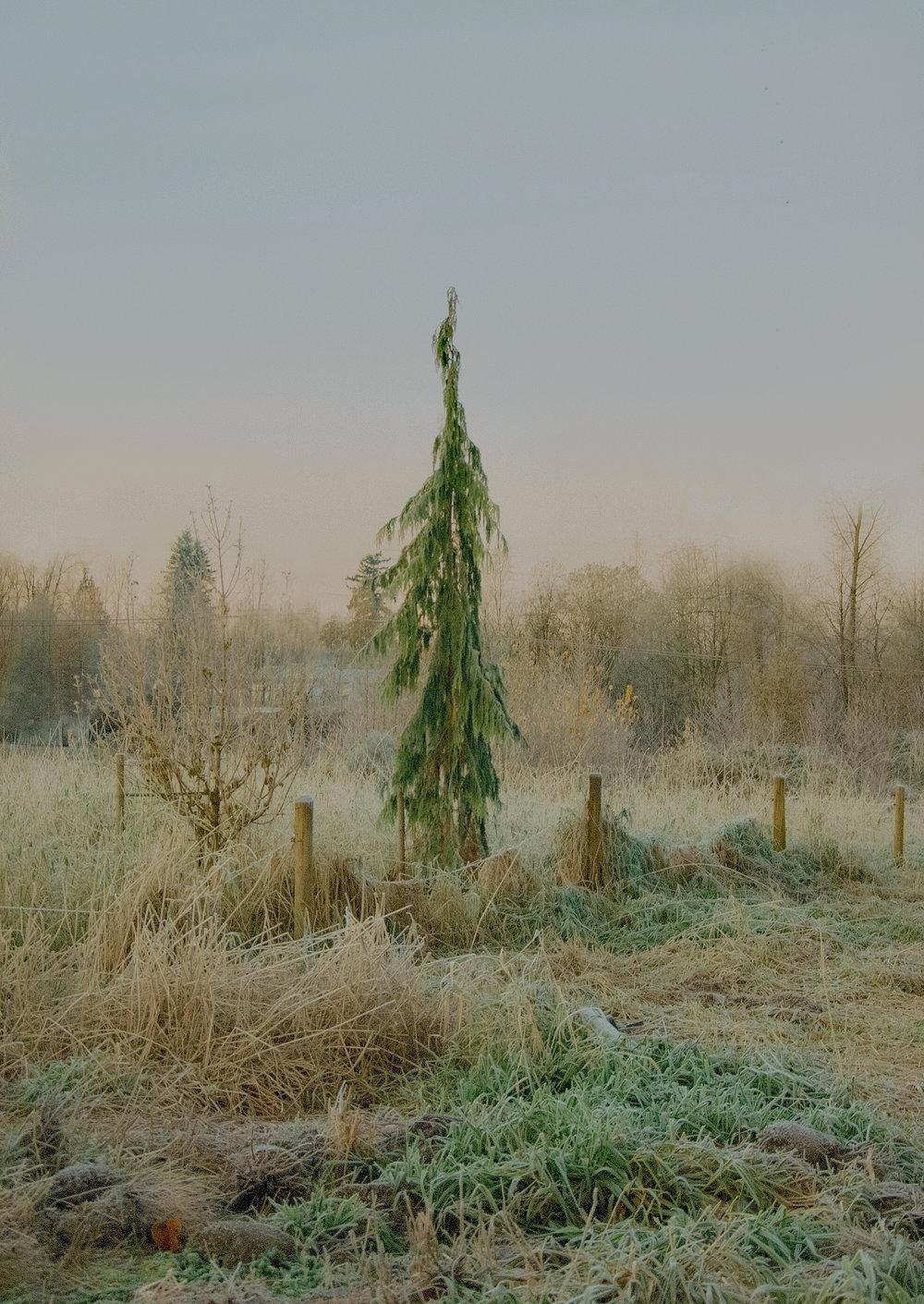 Frosted Tree_2015_Jennifer Latour photo.jpg