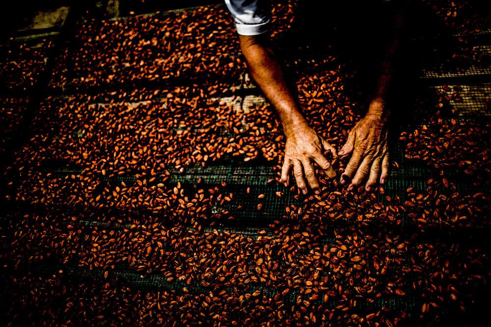 Marou Chocolate Vietnam_Justin Mott_006.JPG