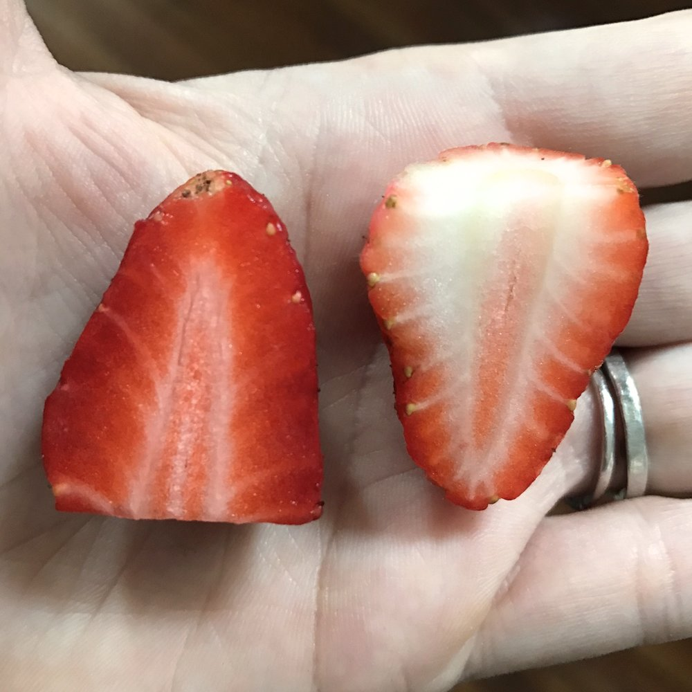 Just look at the difference between these two strawberries! They look the same on the outside, but the second you cut into them, you can see how different they will taste!