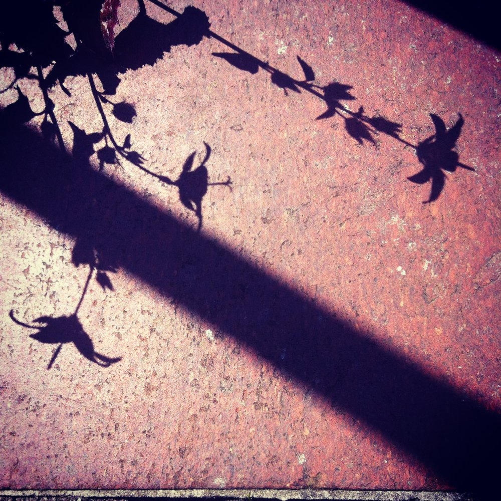 Wendy Ann Greenhalgh Photograph of Shadow.jpg