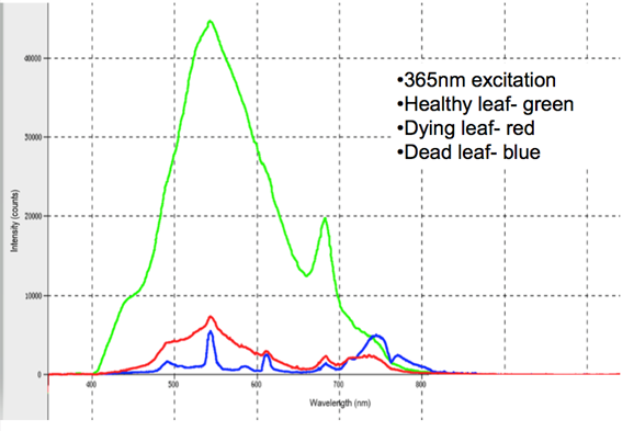 Figure 1.  Fluorescence measurements comparing healthy, dying and dead leaves using the solid sampler on the OPS.