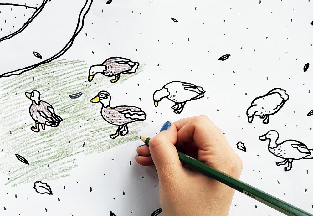 Tegan Iversen 'ducks at Woodlands Park' colouring.jpg