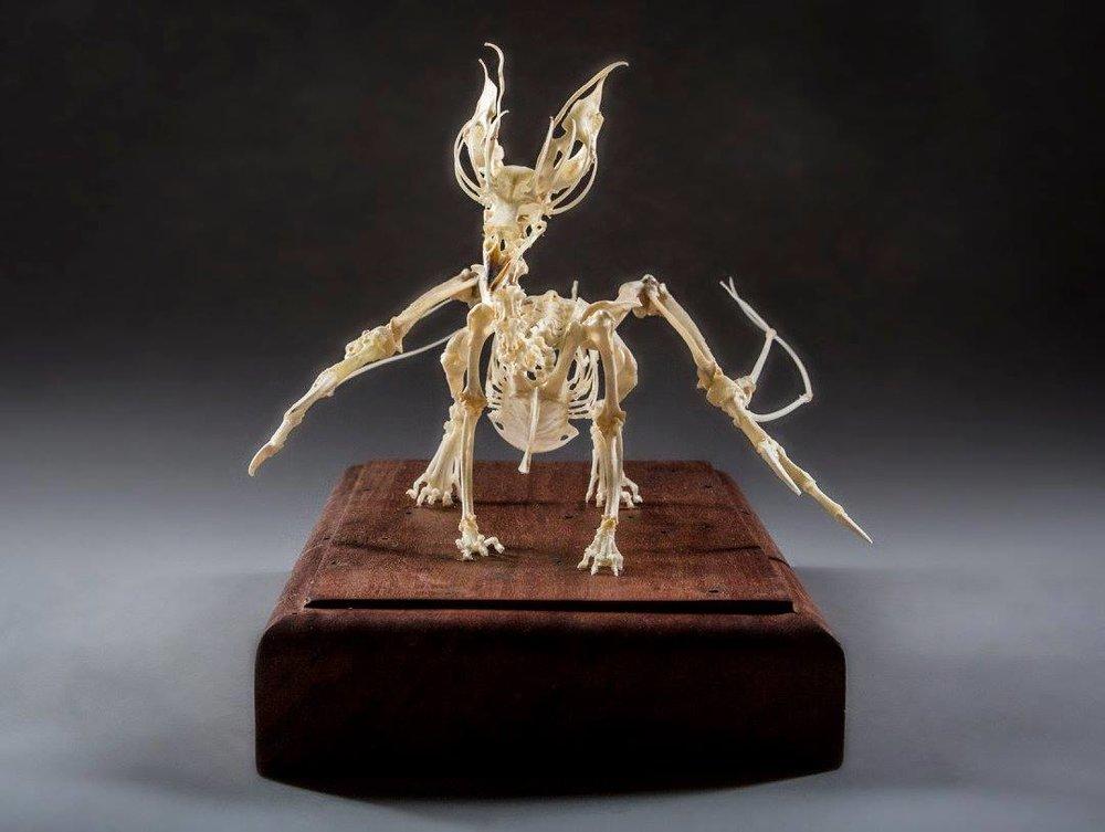Gryphon Chimaera
