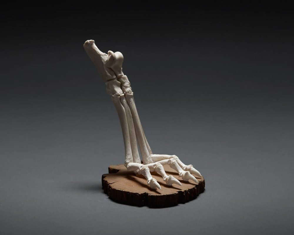 Articulated Dog Foot