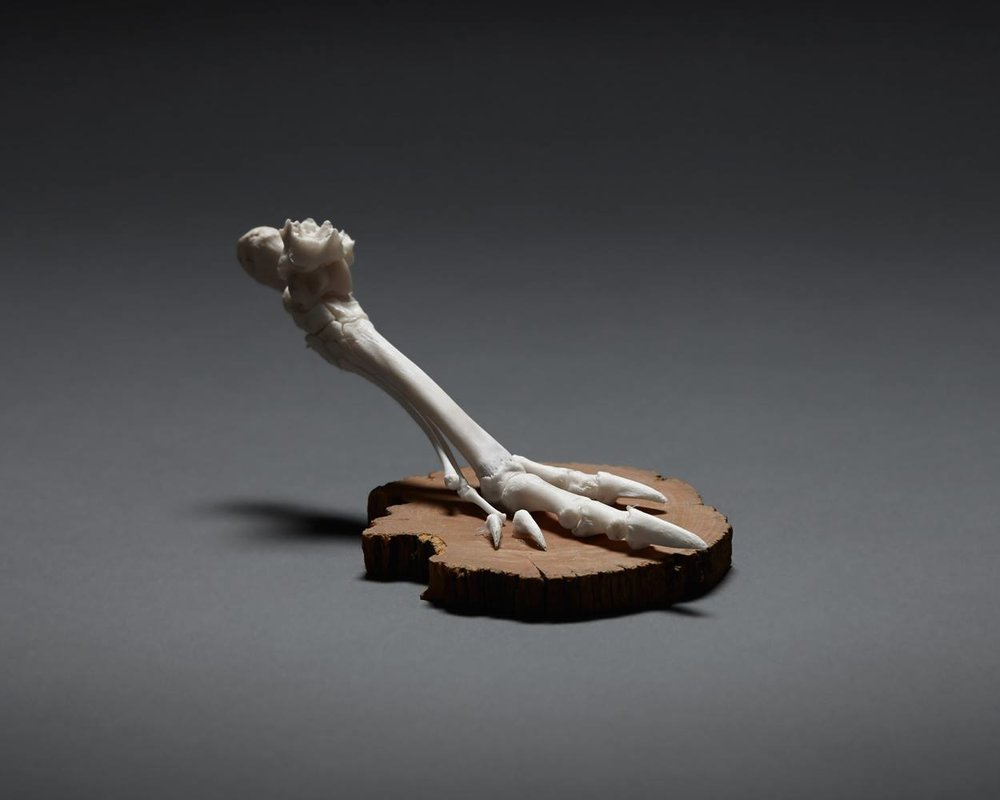 Articulated Wallaby Foot