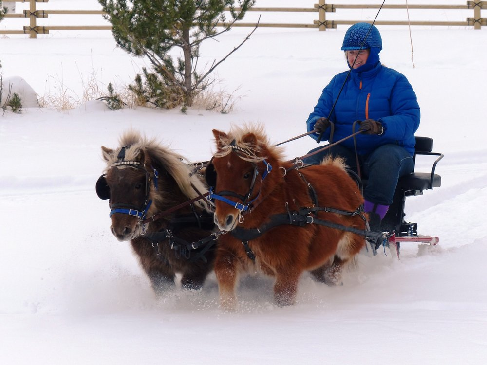 sleighing Storm Kipper.jpg