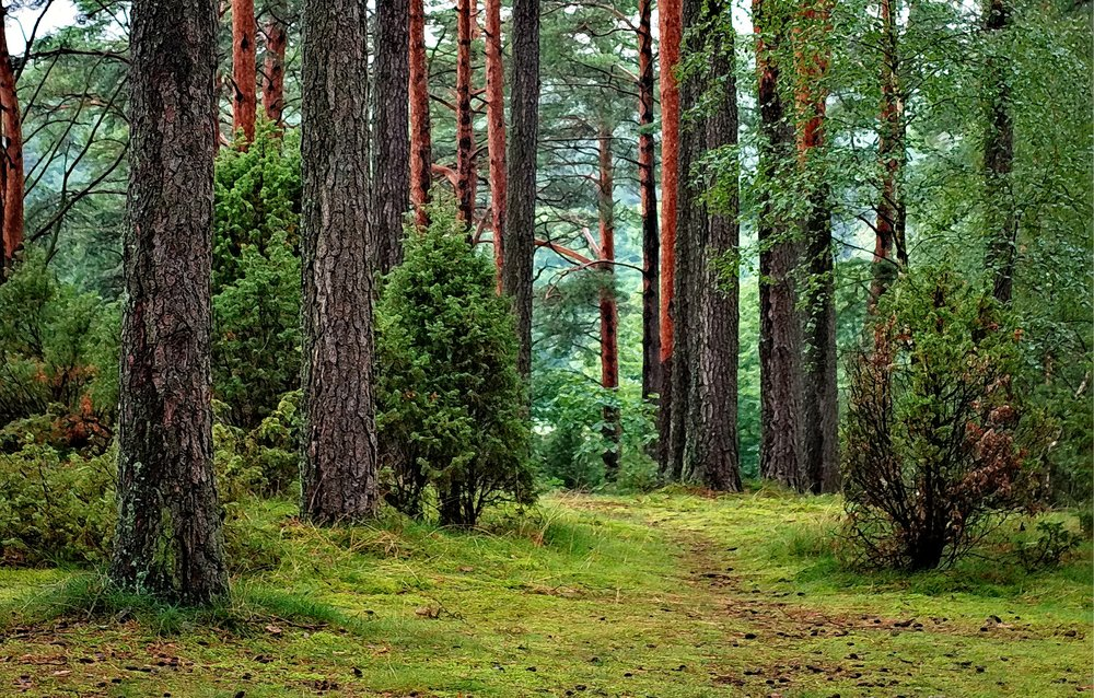 13 millions ha - of forests have been converted to other economic uses in 10 years(2000-2010,FAO)