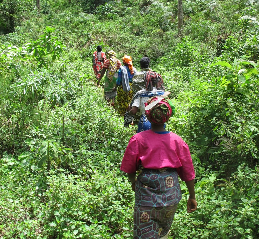 Allanblackia nuts collectors in Tanzania
