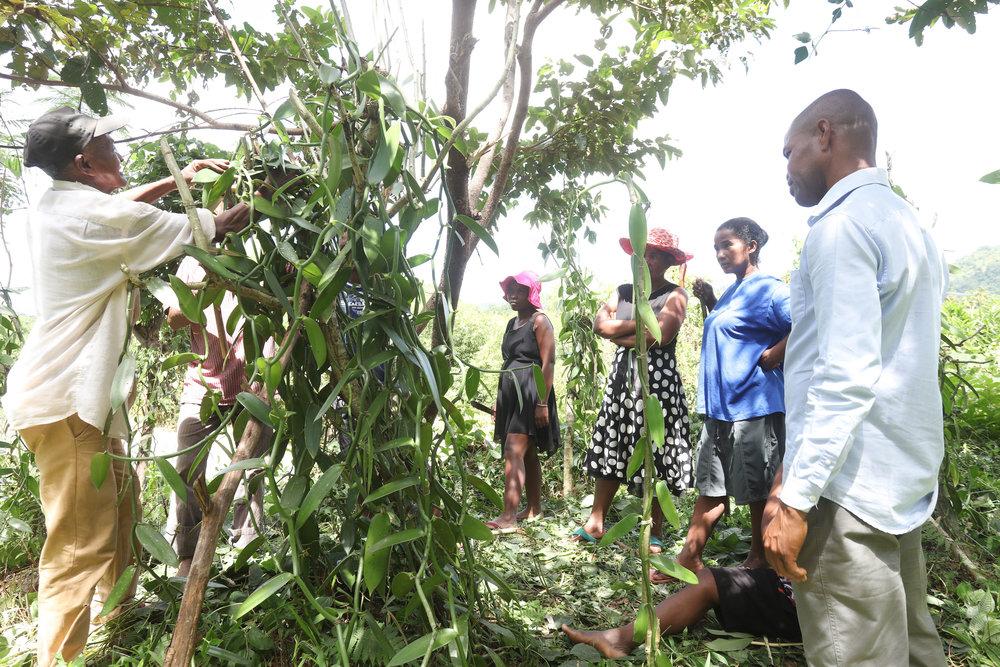 Vanilla collectors, Madagascar ©Symrise AG