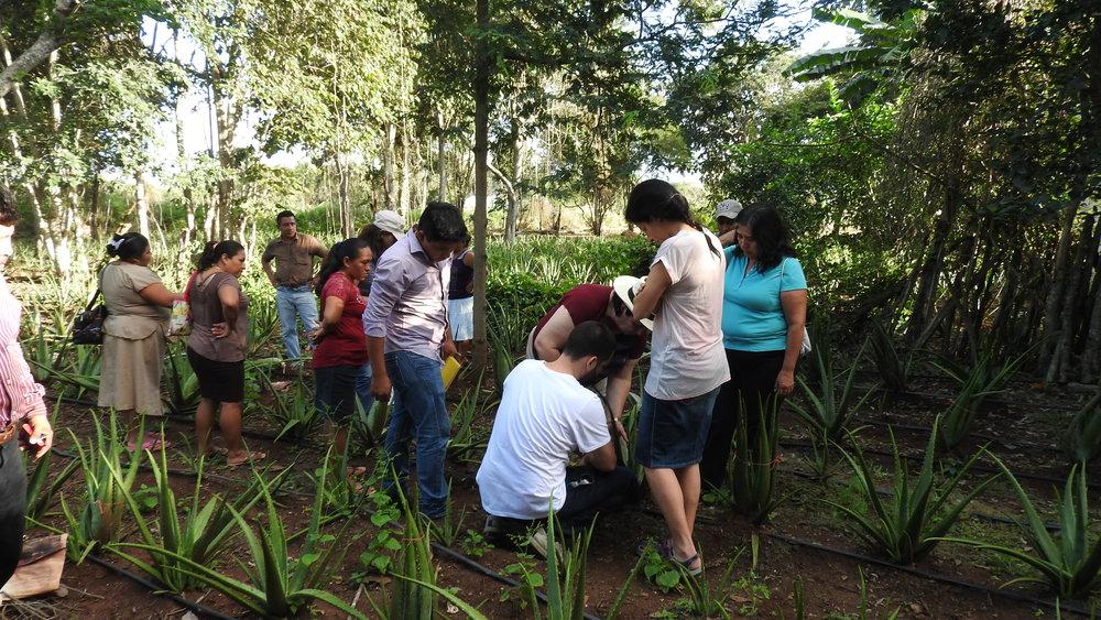 UEBT doing an audit in the Aloe vera field