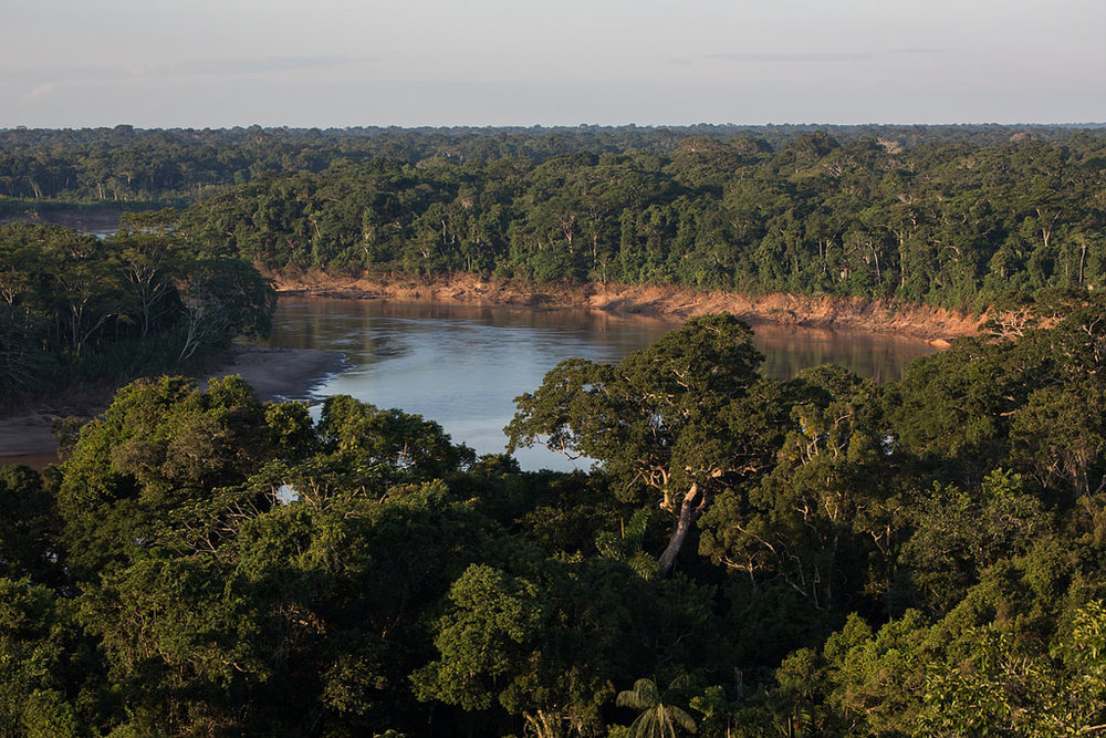 paisajes de la selva 1.jpg