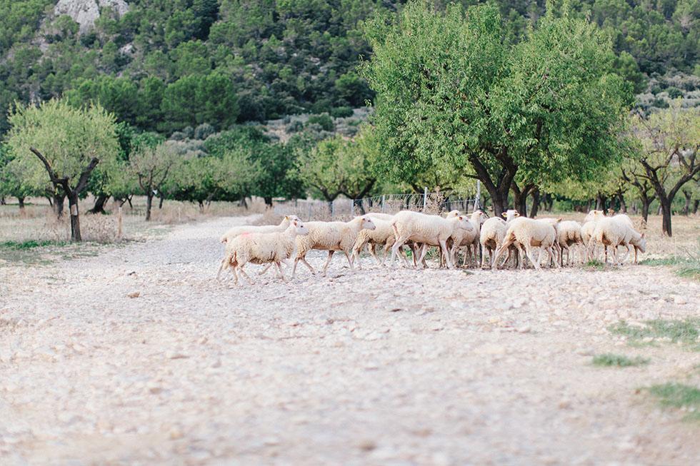 Traumanufaktur_Reisereportage_Mallorca_031.jpg