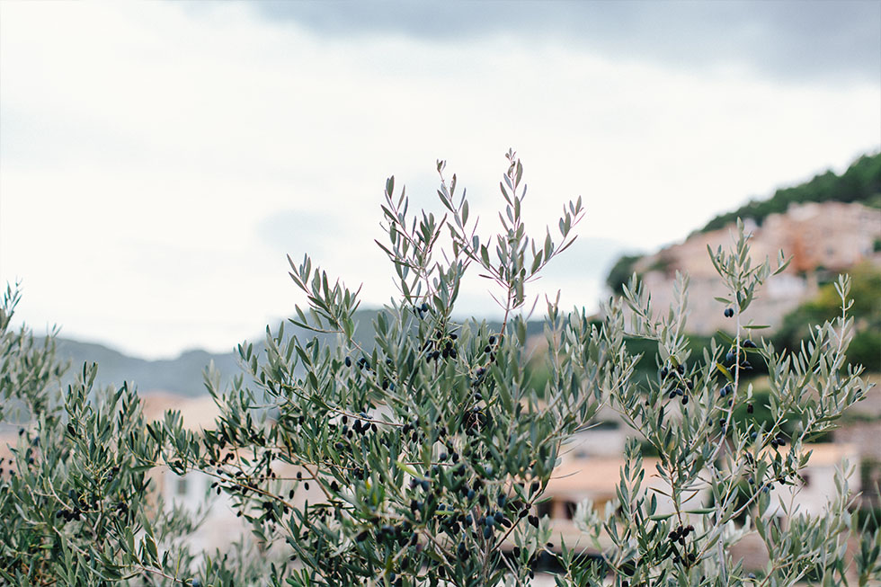 Traumanufaktur_Reisereportage_Mallorca_033.jpg