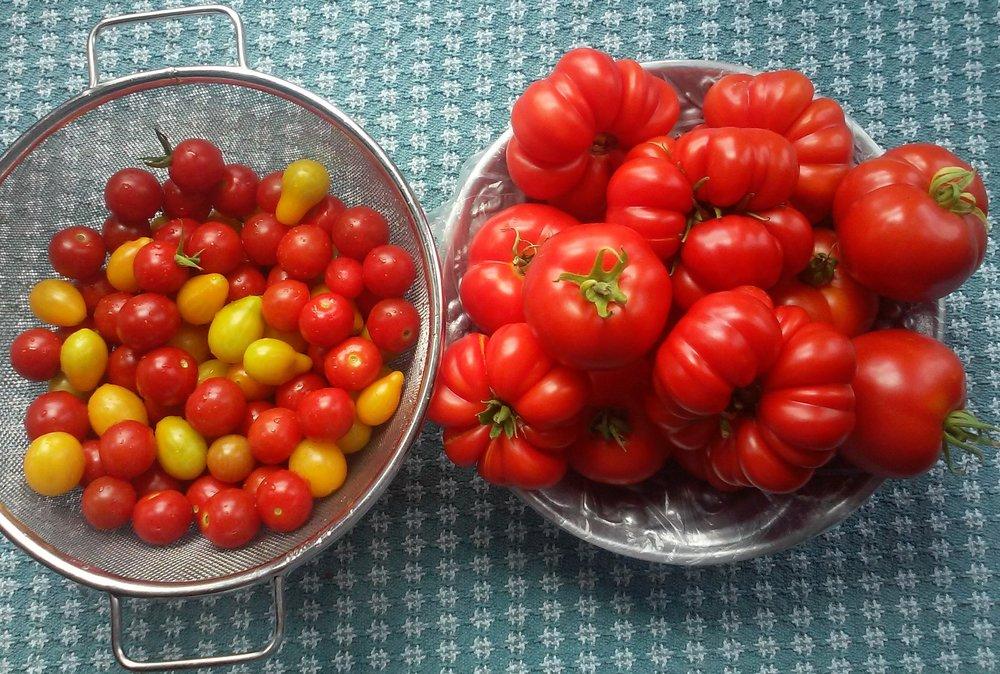 Lots 'o tomatoes