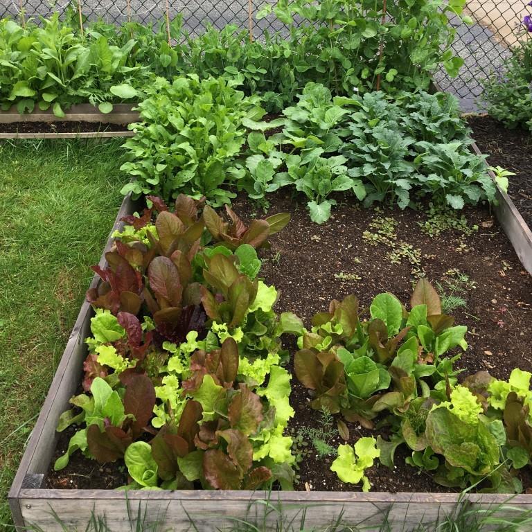 Lettuce Box.JPG