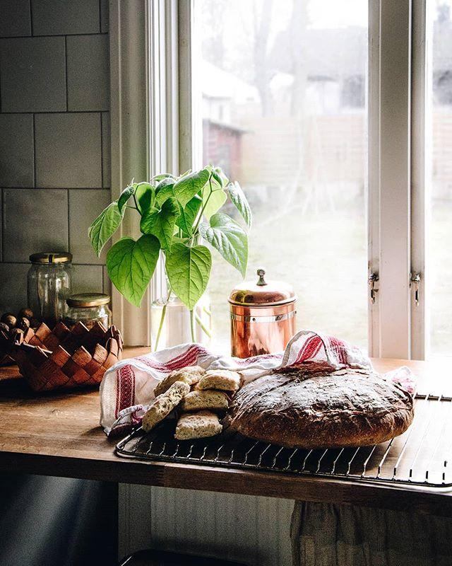 Helgens projekt och skatter ✨ Frön i jord, sticklingar som rotas och jag har bakat både långpannebröd och mitt allra första surdegsbröd 🍞