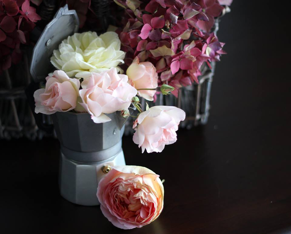 Garden-roses.png