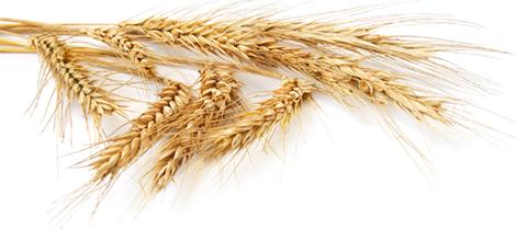 barley png - photo #27