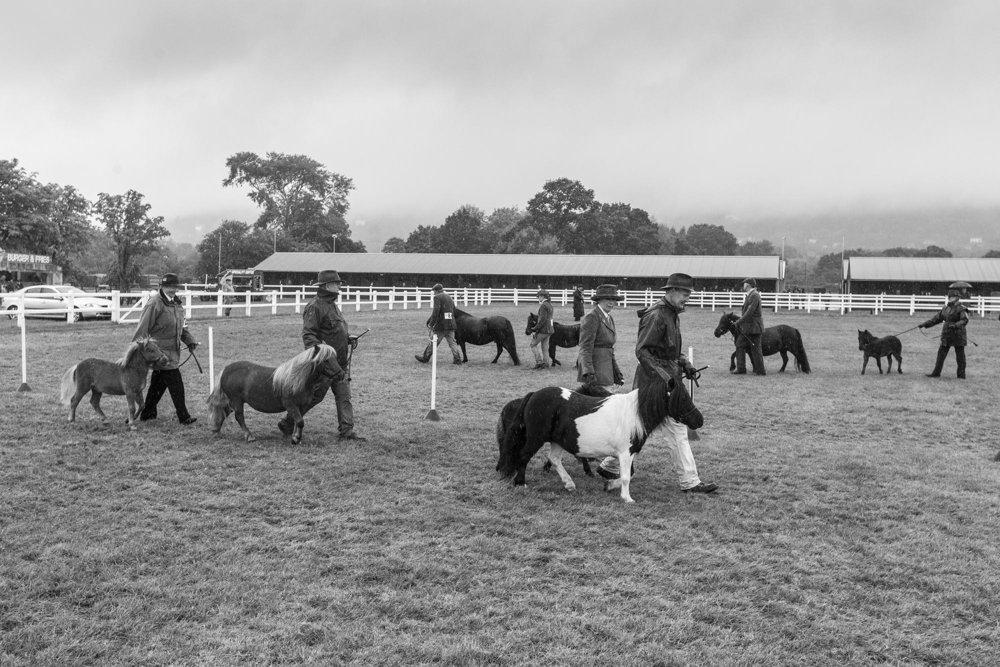 Shetland pony judging, Malvern