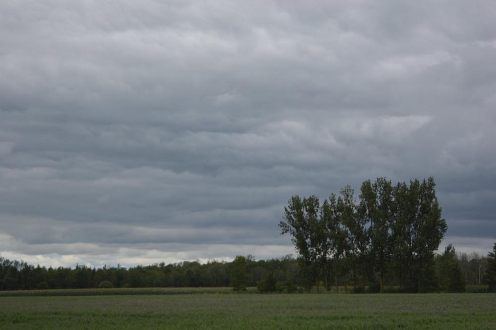 cloudsandtreeclump.jpg