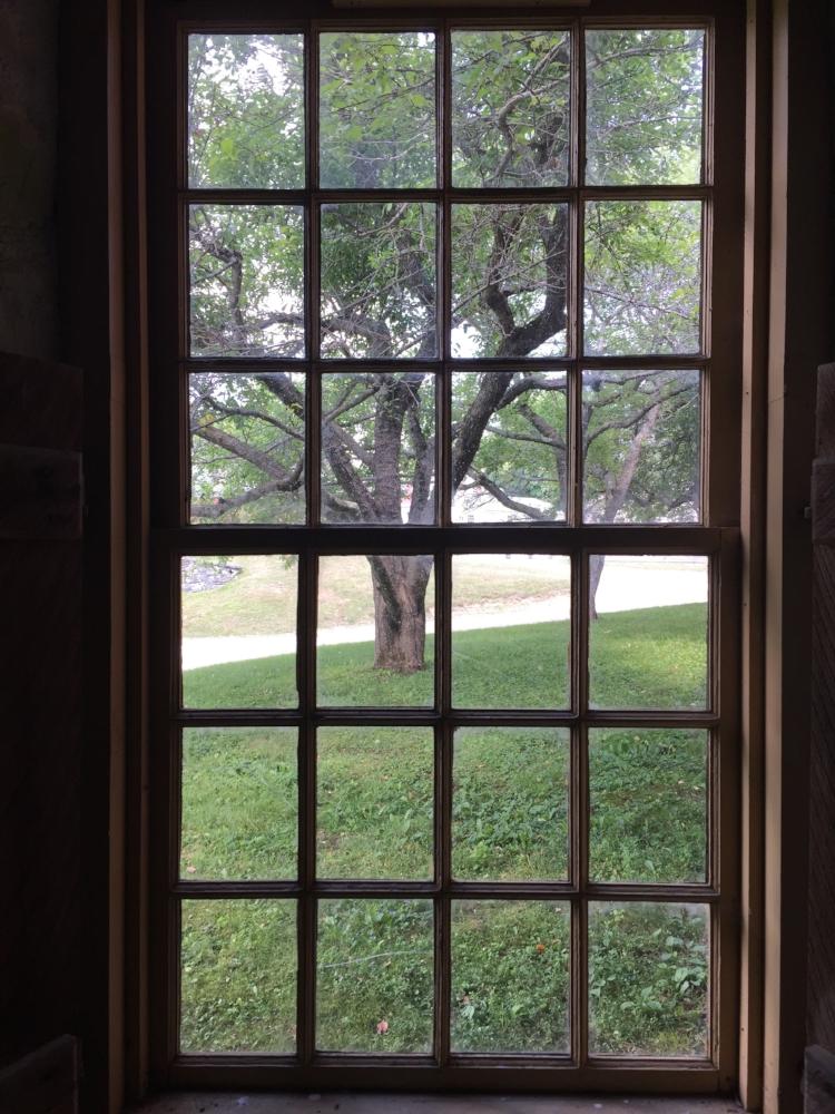 shaker tree.jpg