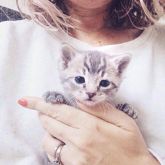 Cuidando gatitos temporalemente con Jen Gotch