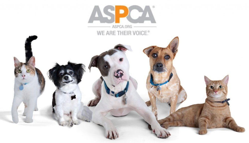 aspca-group-1024x592.jpg