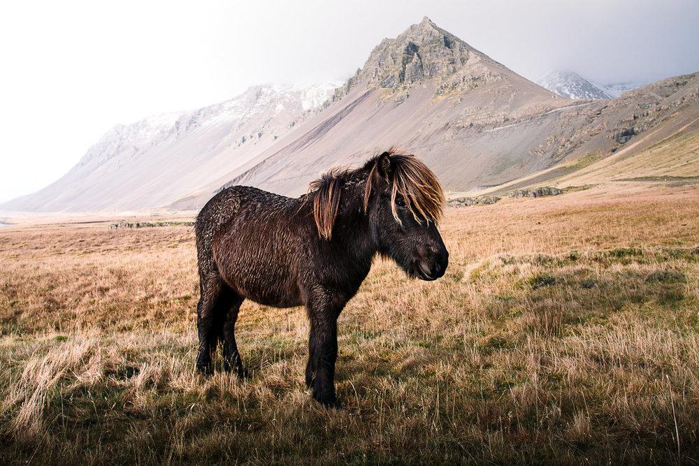FIELD TRIP: TREKKING THROUGH ICELAND WITH TRUENATIVE